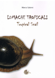 Tropical snail