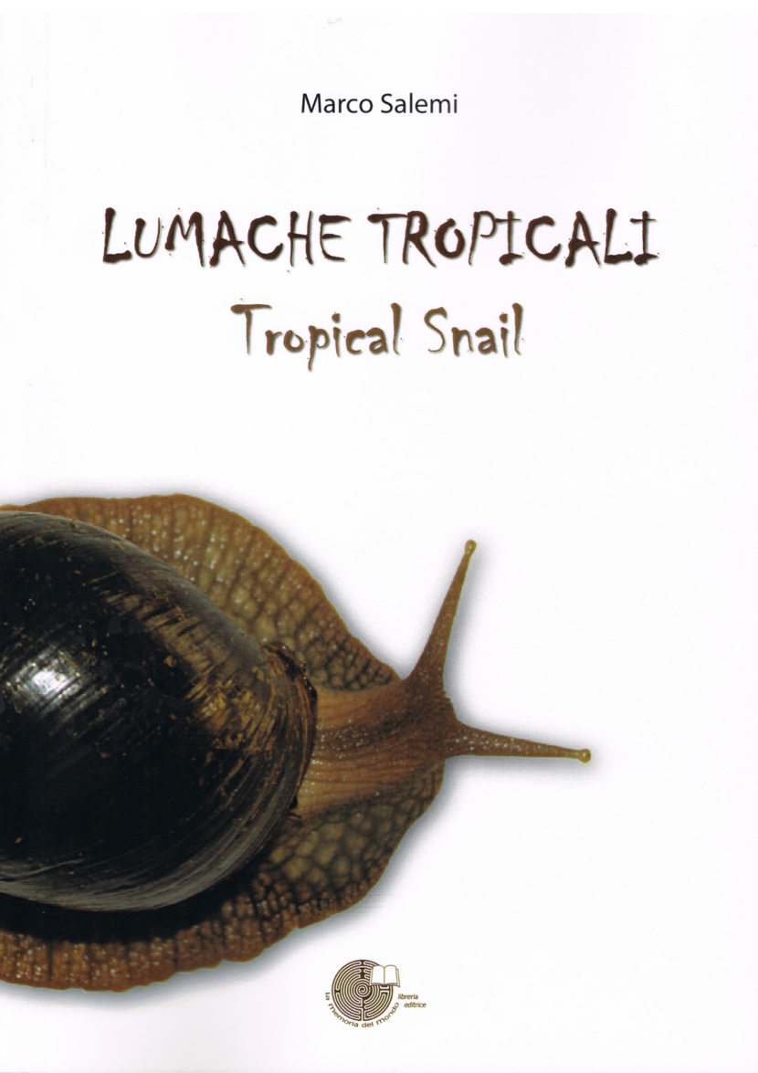 Tropical snail